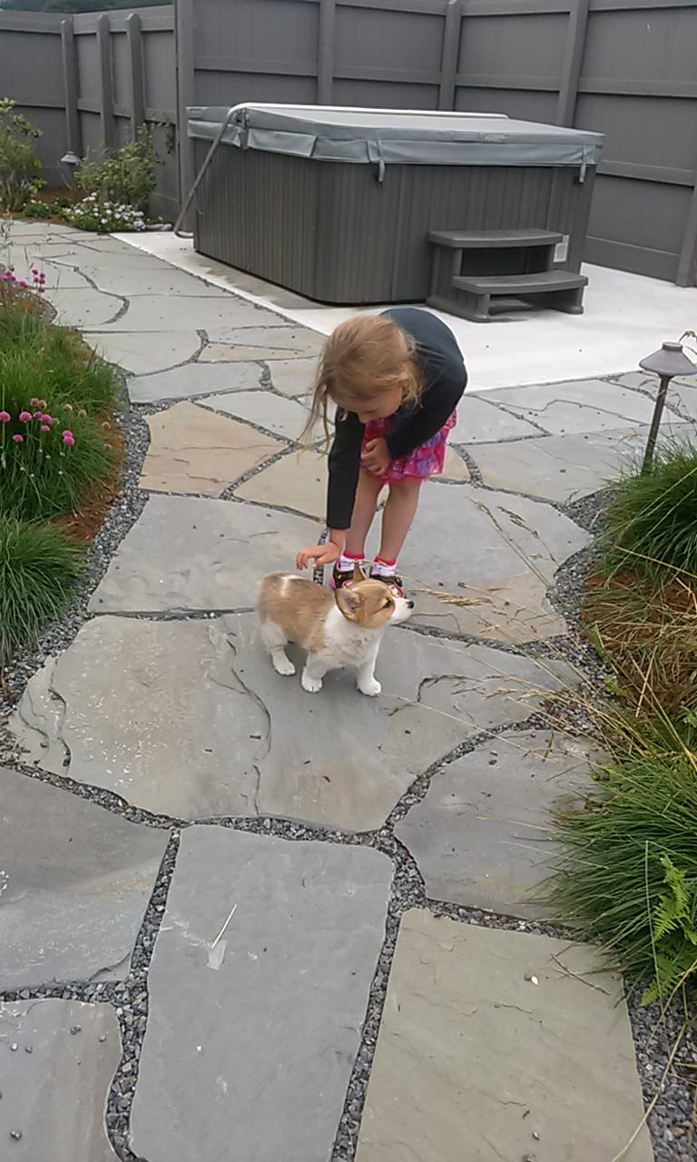 Child pets corgi puppy in Ablaone Bay's courtyard