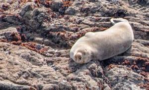 smiling seal ,
