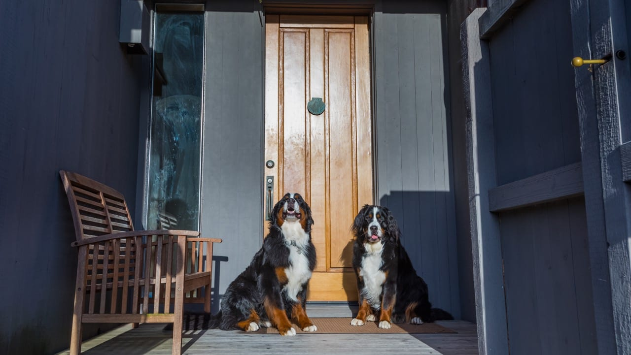 Dog Friendly Restaurants S Ranch