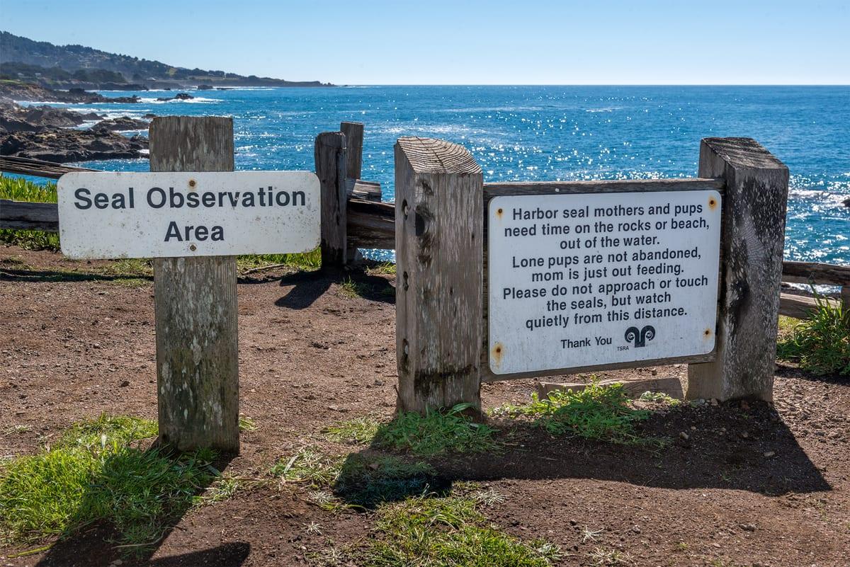 Marine Sancturay, Harbor Seal Sanctuary