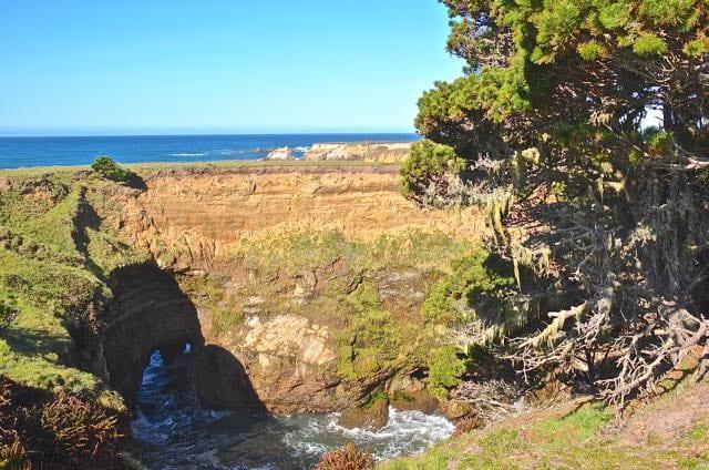 Spanish moss found in Stornetta