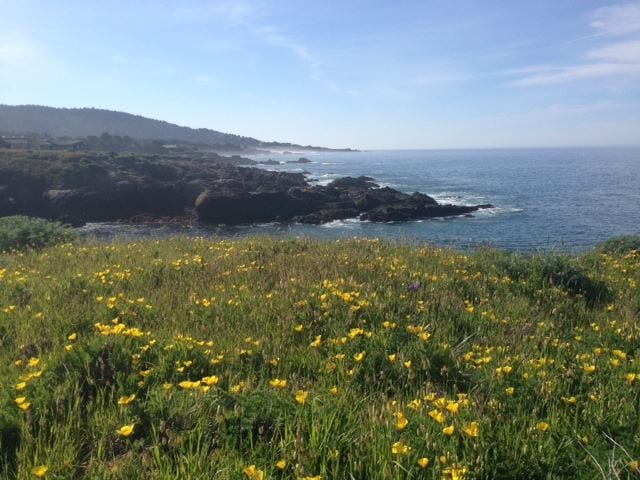 Nature Walk to Discover Sea Ranch Wildflowers