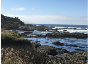 sea ranch, memories, blue heron