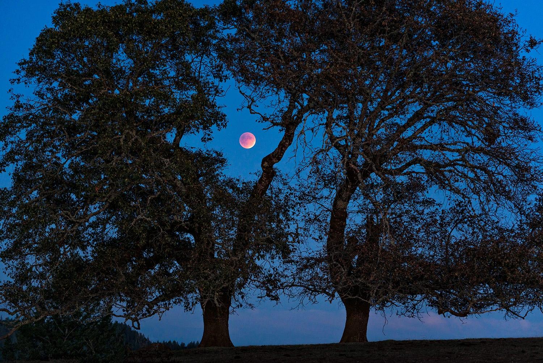 Super Eclipsed Blood Harvest Moon, Paul Kozal,Sea Ranch Supermoon