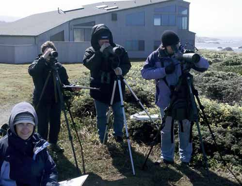 The 116th Christmas Bird Count Is Coming to Sea Ranch!