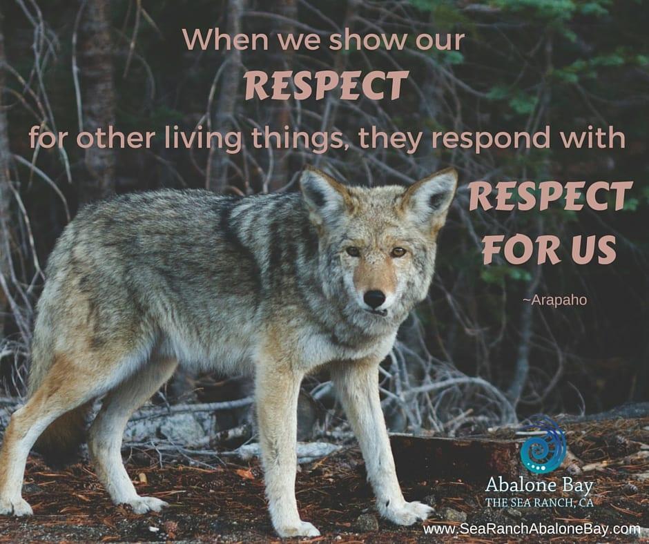 Sea Ranch Coyotes,Coyotes, Sea Ranch, Abalone Bay, Vacation Rental