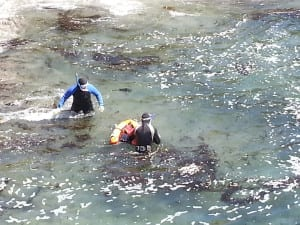 trophy abalone diving, Abalone Divers, Sea Ranch, Abalone Season, abalone,sea ranch weather, ocean temperatures,Abalone Season 2017