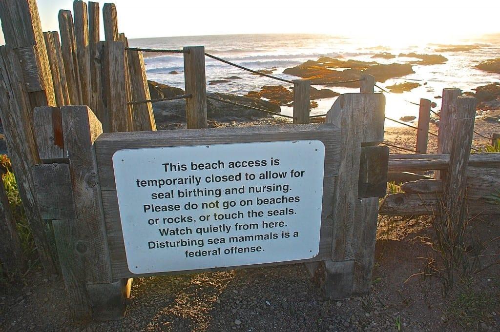 Sea Ranch harbor seals, harbor seals, Sea Ranch, Marine Mammal Center,beach closed
