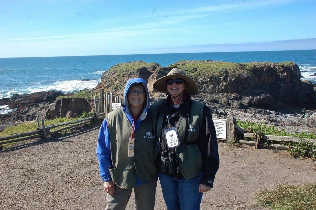 Sea Ranch harbor seals, harbor seals, Sea Ranch, Marine Mammal Center