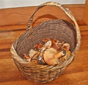 mushrooms,Christmas season , Christmas,Sea Ranch, Abalone Bay, vacation, vacation rental, family , dog friendly,