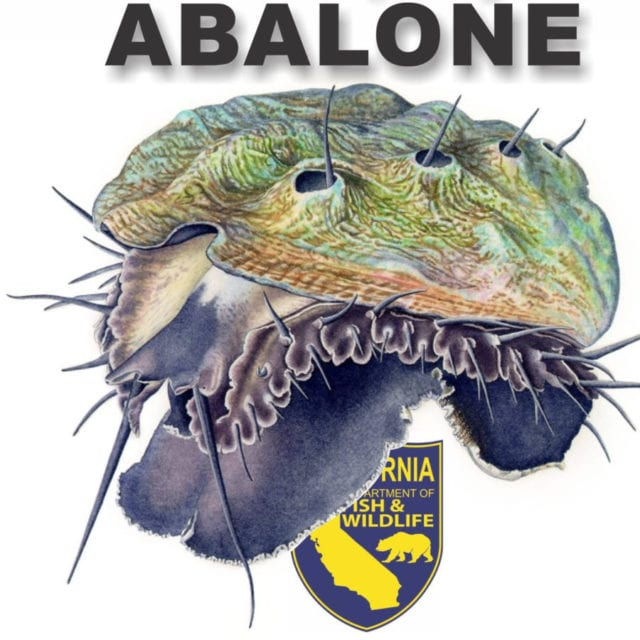 ,Abalone Season 2017, Randy Fry Memorial Dive Tournament, family event, abalone tournament