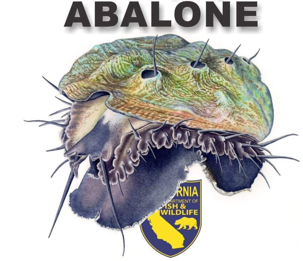 Abalone season 2017 new regulations and diving sea ranch for Kid friendly fishing near me