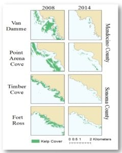 Chart showing kelp cover