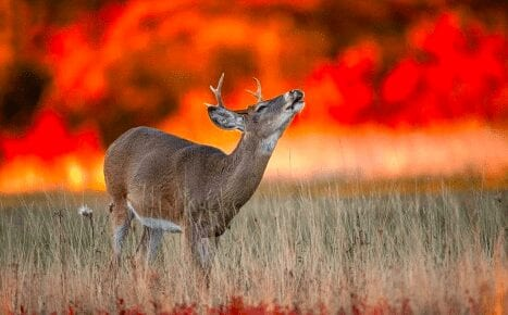 Deer seen in front of wildfires, Sonoma County wildfires, Sonoma County fires, North Bay fires, climate change