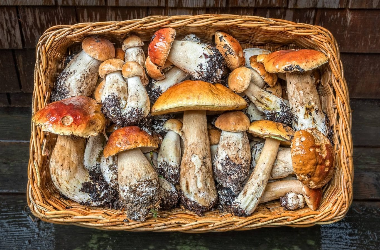 local events, mushrooms