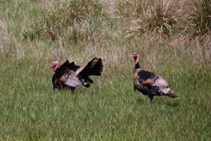 Sea Ranch Thanksgiving,