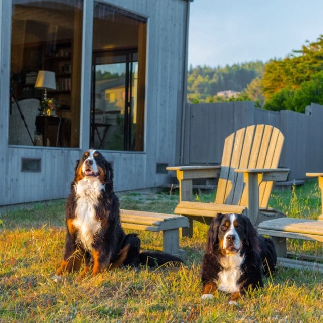 two dogs at Abalone Bay, travel hacks, dog friendly, pet friendly, dog passionate