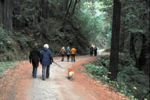 explore, Sea Ranch trails, walking Sea Ranch trails