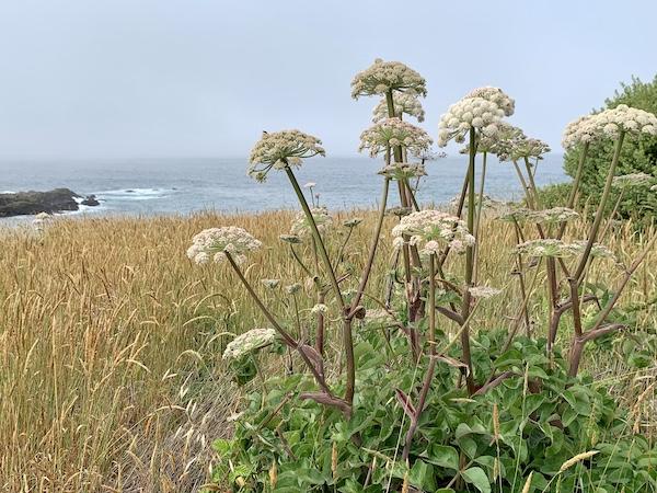 Sea-Watch plant on ocean bluff