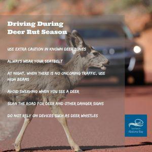 deer crossing road in front of car