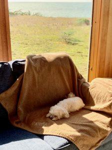 maltese dog sleeping on blanket on sofa, ocean views in window